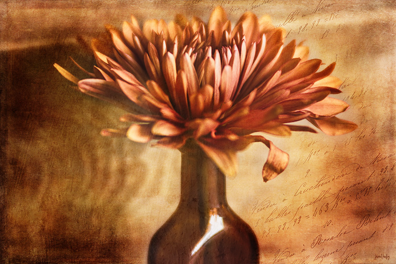Still life of flower in a bottle.