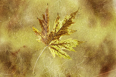 yellow_leaf