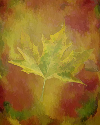 Maple_Watercolor