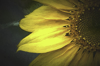 Sunflower_Impression