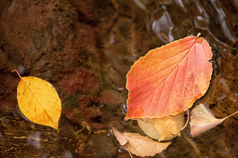 Leaves_floating