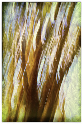 Tree_Abstract_TTE